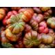 Graines de Tomate Purple Calabash