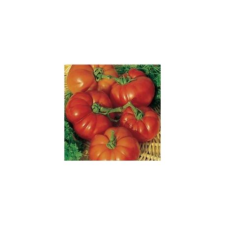 Graines de Tomate de Marmande