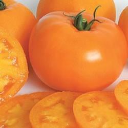 Graines de Tomate Orange Queen