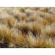 Graines de Stipa arundinacea