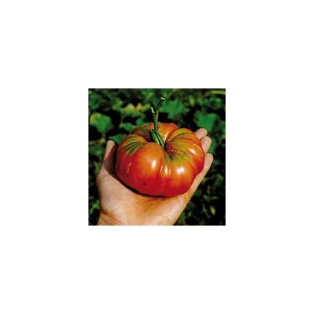 Graines de Tomate Potiron écarlate AB