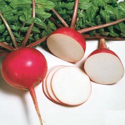 Graines de Radis asiatique Misato red