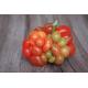 Graines de Tomate Voyage AB