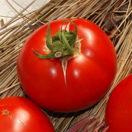 Graines de Tomate Saint Pierre AB