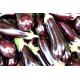 Graines de Aubergine violette de Barbentane AB