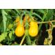 Graines de Tomate Poire jaune AB