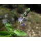 https://fr.wikipedia.org/wiki/Projet:Botanique/Accord_Henry_Brisse