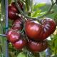 Graines de Tomate Noire de Crimée AB