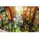 Graines de Rhubarbe des Jardins AB