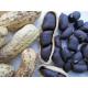Graines de Arachide Noire