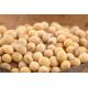 Graines de Haricot à rames à écosser Coco Blanc