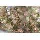 Graines de Erica arborea