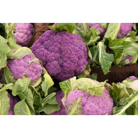 Graines de Chou-Fleur Violetto di Sicilia