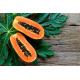 Graines de Carica papaya Waimanalo