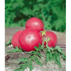 Graines de Tomate Russe rose AB