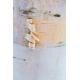 Graines de Betula papyrifera