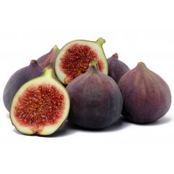 Graines de Ficus carica Purple