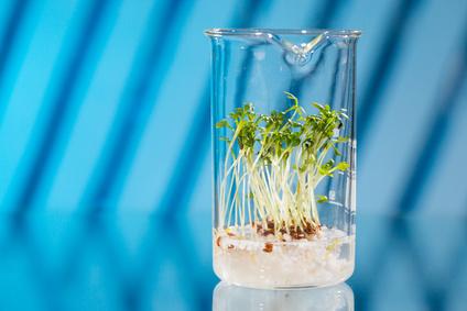 GMO plant in biological laboratory